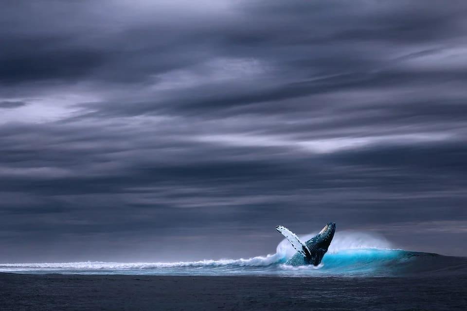 Balinalar neden intihar eder